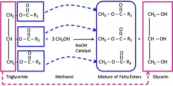 biodiesel equation_cater oils