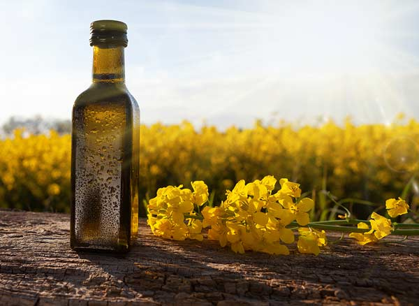 Rapeseed Oil Suppliers